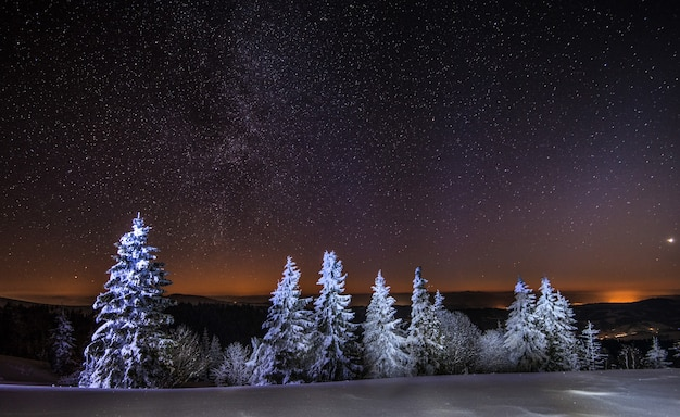 Betoverend nachtlandschap besneeuwde sparren groeien tussen sneeuwbanken tegen de achtergrond van niet-bergketens en een heldere sterrenhemel