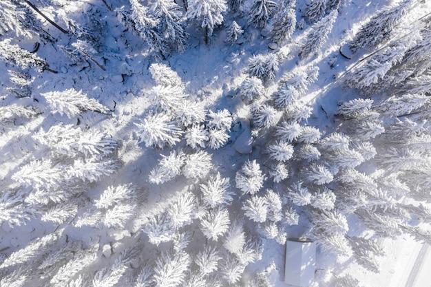 Betoverend uitzicht op prachtige met sneeuw bedekte bomen