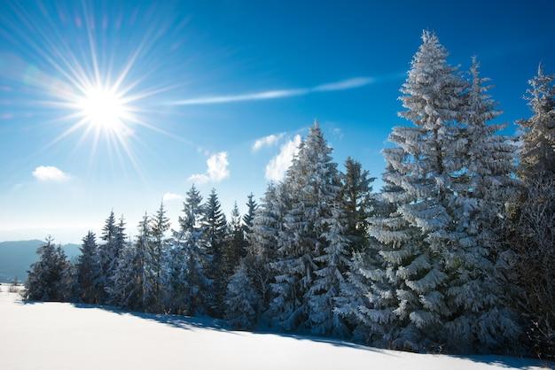 Betoverend winterlandschap met een besneeuwde helling en bomen die groeien tegen een blauwe lucht en witte wolken op een zonnige ijzige winterdag. het concept van ongerepte natuurlijke omgeving