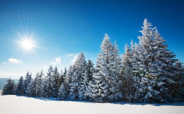 Betoverend winterlandschap met een besneeuwde helling