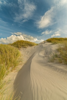 Betoverende opname van een vredig strand onder de blauwe lucht