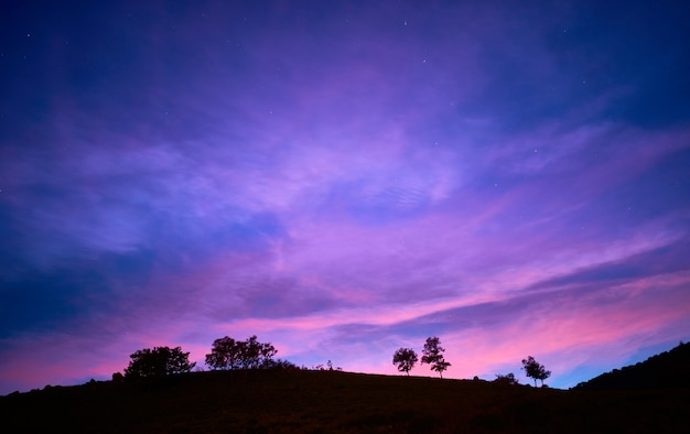 Betoverende weergave van silhouetten van bomen onder de avondrood