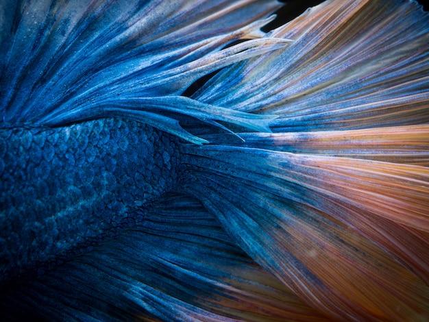 Betta vis textuur achtergrond