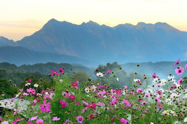 Beuatiful kleurrijke bloemen van majestueuze zonsondergang in het bergenlandschap