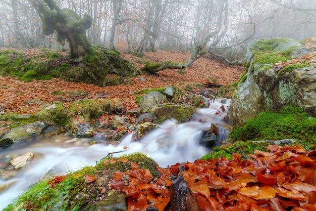 Beukenlandschap in de herfst met kreek die de berg afdalen en fotografie met lange blootstelling. somosierra spanje.