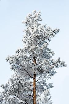 Bevroren boom op de winter witte hemel. ijzige dag, rustig winters tafereel. geweldig uitzicht op de wildernis.