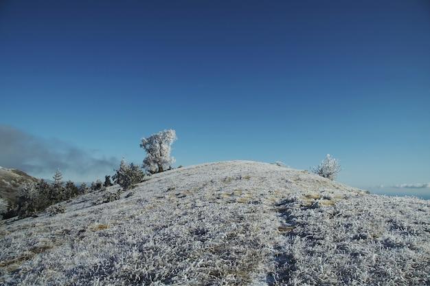 Bevroren boom op met sneeuw bedekte heuvel
