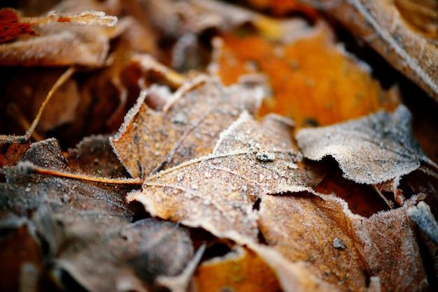 Bevroren de herfst natuurlijke dichte omhooggaande kleurrijke rode, groene, gele bladeren.