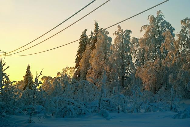 Bevroren draden van transmissielijnen over een open plek in een winter besneeuwd bos