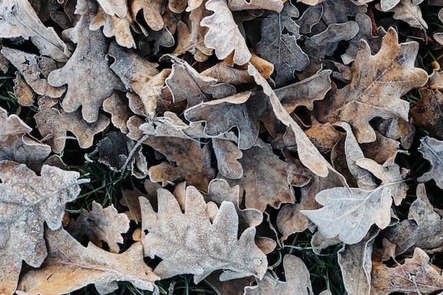 Bevroren droge eikenbladeren op de grond