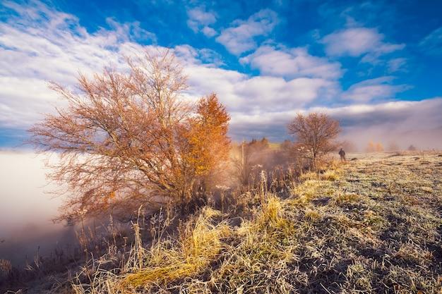 Bevroren gras bedekt met witte rijp tegen de achtergrond van een prachtige blauwe lucht en pluizige witte mist