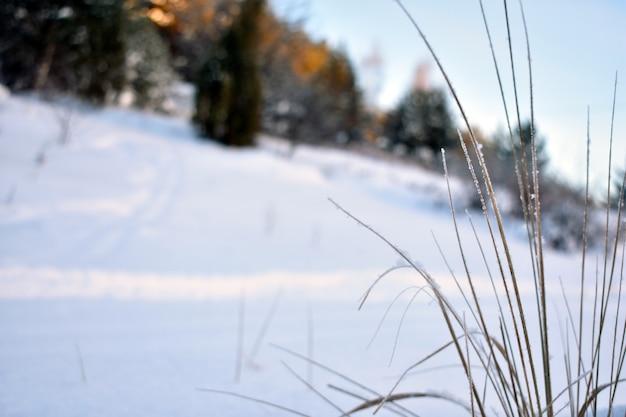 Bevroren gras in het winterbos