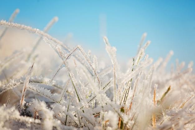 Bevroren gras op blauwe hemel achtergrondkleur.