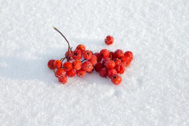Bevroren lijsterbessen