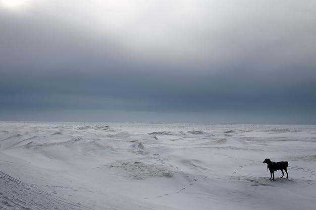 Bevroren meer in canada.