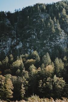 Bevroren mysterieus bos op een warme winterdag die laat zien hoe mooi de winter kan zijn