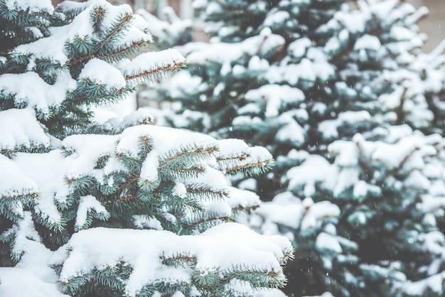 Bevroren naaldtakken in de witte winter