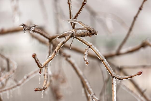 Bevroren planten bedekt met een dikke laag ijs