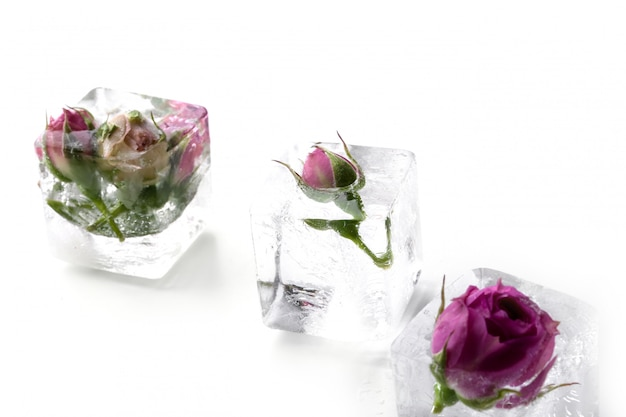 Bevroren roos