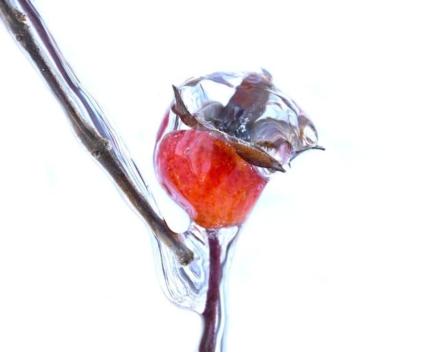 Bevroren rozenbottelbes groeit op een tak bedekt met ijs en ijspegel op een winterdag in rusland