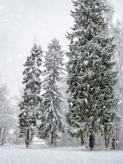 Bevroren takken. sfeervol bosgebied