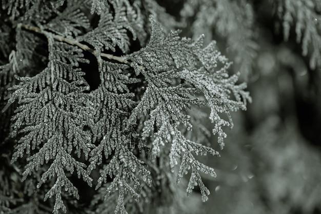 Bevroren takken werden in de ijzige vroege ochtend gegeten.