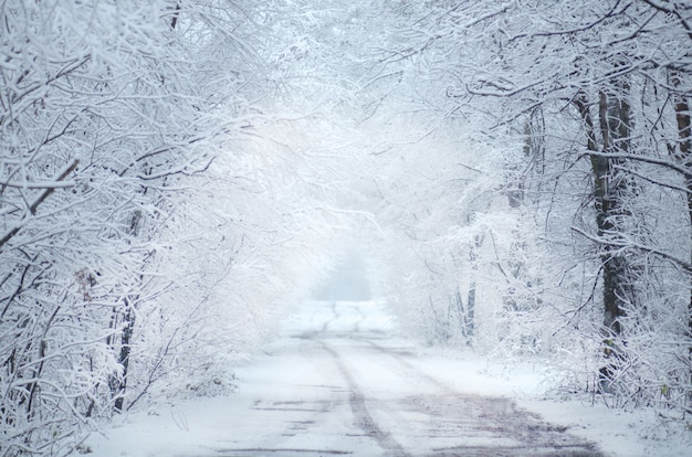 Bevroren winter bomen