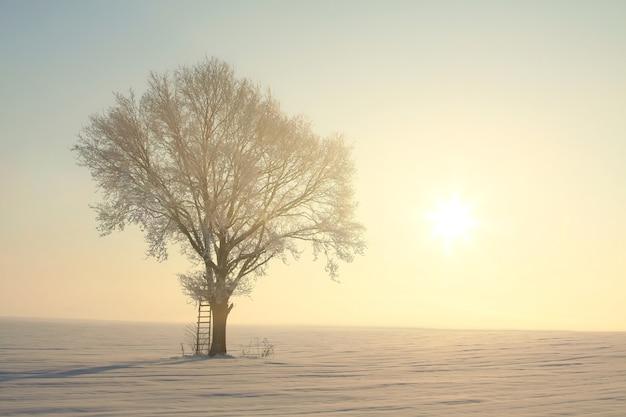 Bevroren winterboom tegen een blauwe hemel tijdens zonsopgang
