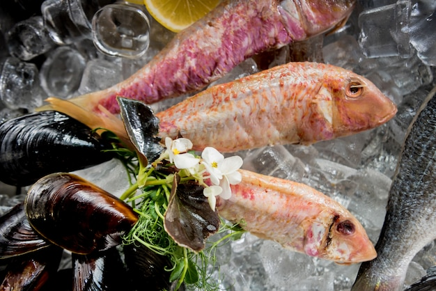 Bevroren zie voedsel op ijs. garnalen, vis en schelpen. kalk en ijs op metalen achtergrond