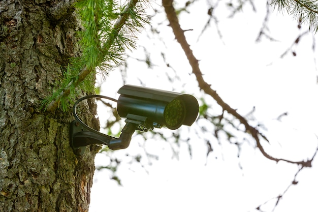 Bewakingscamera op de boom