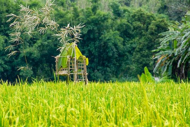 Bewakingsgeest in rijstvelden