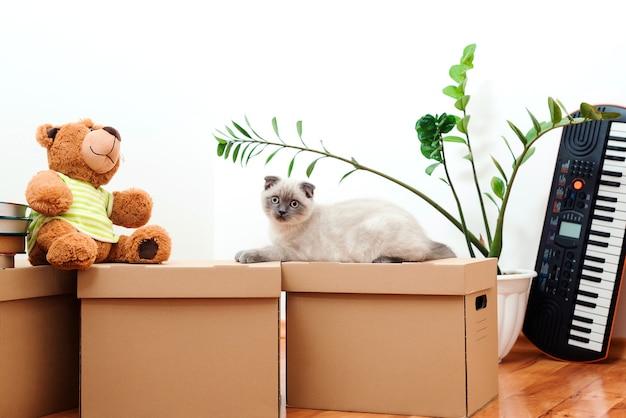 Bewegende huis dag kat zittend op de dozen in nieuw huis nieuw huis concept