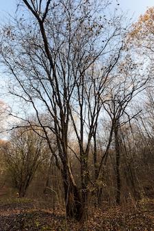 Bewolkt regenachtig laat in de herfst met rottend in het park gebladerte van esdoorns en loofbomen