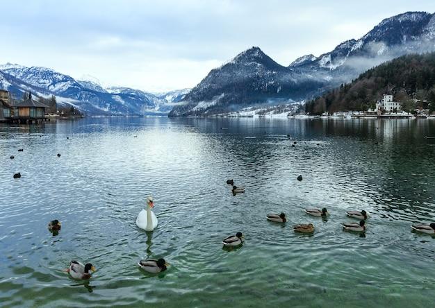 Bewolkt winter alpine meer grundlsee uitzicht (oostenrijk) met wilde eenden en zwaan op water.