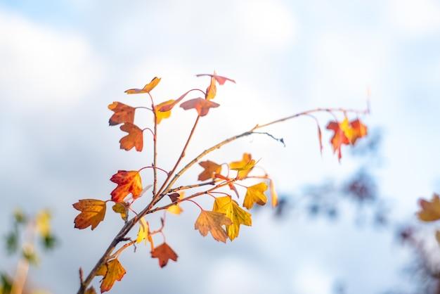 Bewolkte hemel, tak met gele droge bladeren