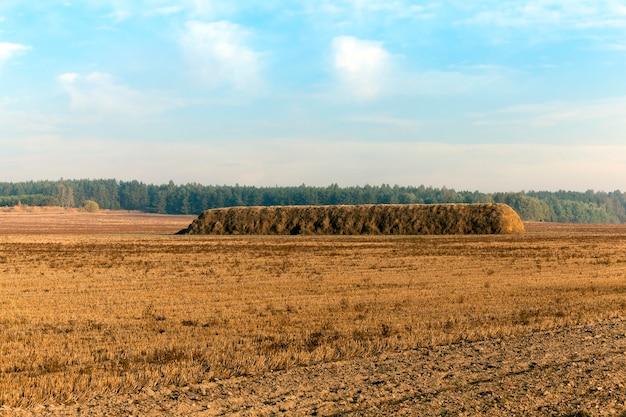 Bewolkte lucht boven een landbouwveld met stapels stro na de oogst van haver, een zomers landschap