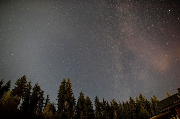 Bewolkte sterrennacht met groenblijvende bomen