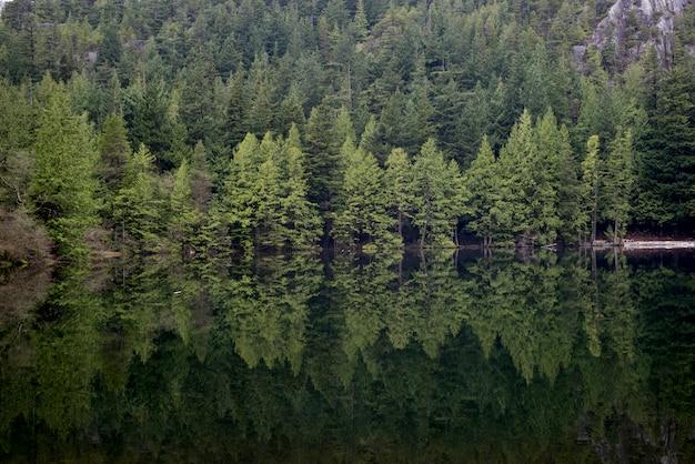 Bezinning van bomen in een meer, west-vancouver, brits colombia, canada