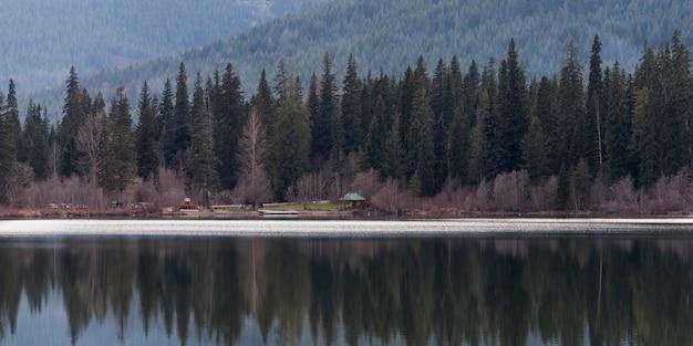 Bezinning van pijnboombomen in een meer, brits colombia, canada