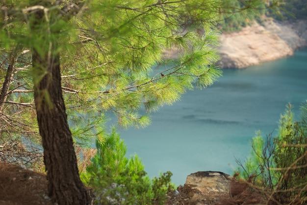 Bibrant aromatische naaldbomen en aquamarijn gekleurd water in de bergen