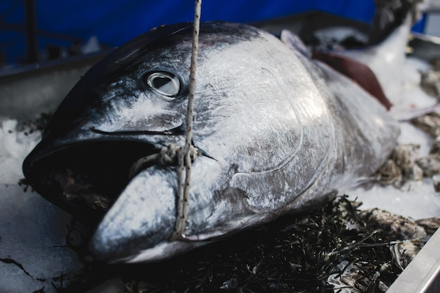 Big tuna fish in food market