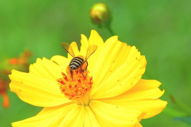 Bij die aan de mooie bloem vliegt