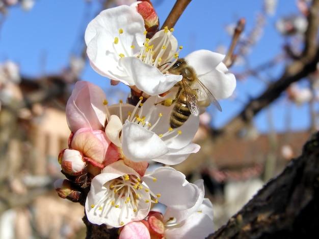 Bij die nectar van bloem haalt
