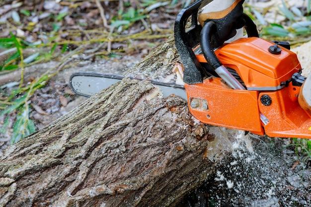 Bij het zagen van een boom met een kettingzaag brak de stamboom na een orkaan