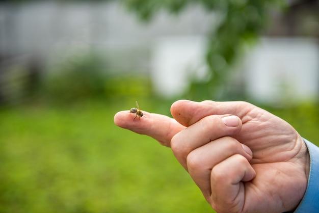 Bij zit op een vinger van een imker. imker bedrijf vinger bij veel.
