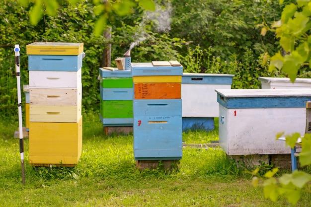 Bijen bij oude bijenkorfingang.