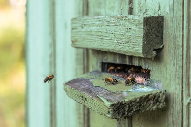 Bijen; bijenkorf; bijenteelt; honing productie; huis bijenstal concept. stock foto