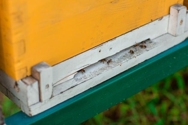Bijen die dichtbij de bijenkorf vliegen