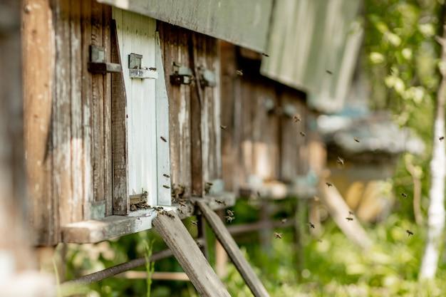 Bijen die terugkeren naar de bijenkorf en binnenkomen
