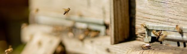 Bijen die terugkeren naar de bijenkorf en de bijenkorf binnengaan met verzamelde bloemennectar
